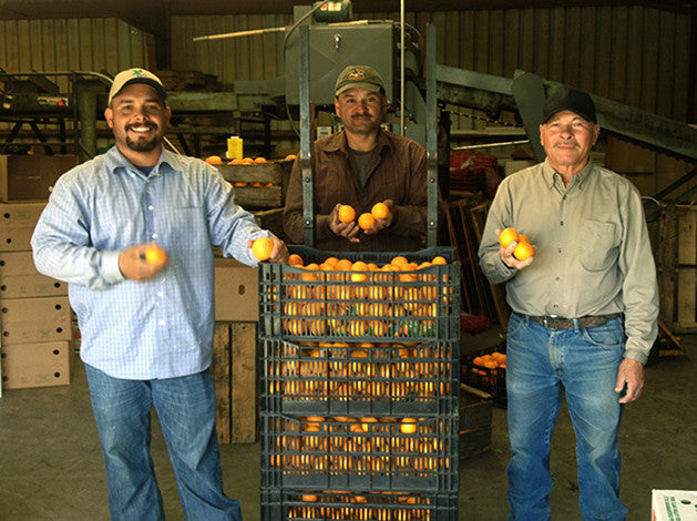 Jose, Carlos and Reyes who hand pick most of Friend's Ranches citrus.