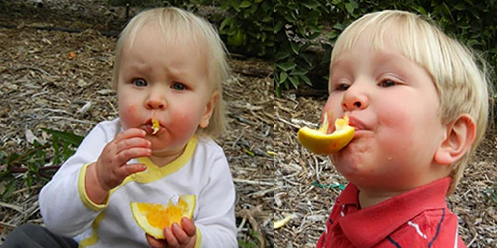 The next generation of the Friend family enjoying Navel oranges
