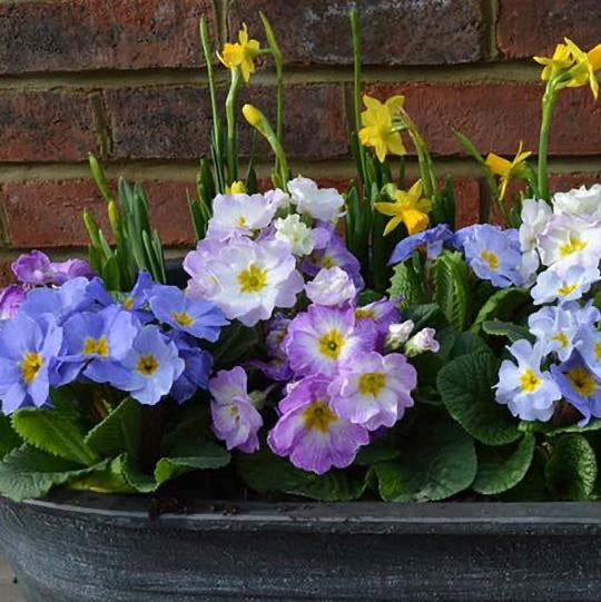 Gardening Blog: Add some colour to those Winter Blues!