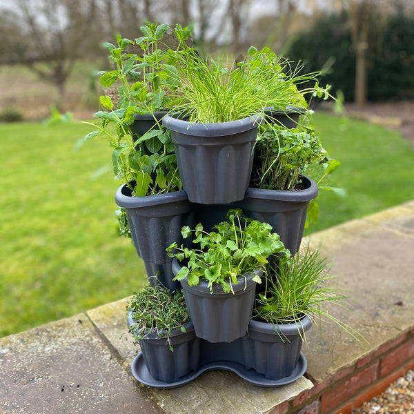 Herb Garden and Tri Planter 12 Plant Pack - Despatch From WC 7th June