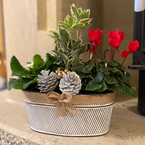 Make Your Own Christmas Planter - Despatch from WC 30th November