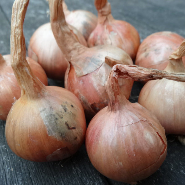 Onion, Shallot and Garlic
