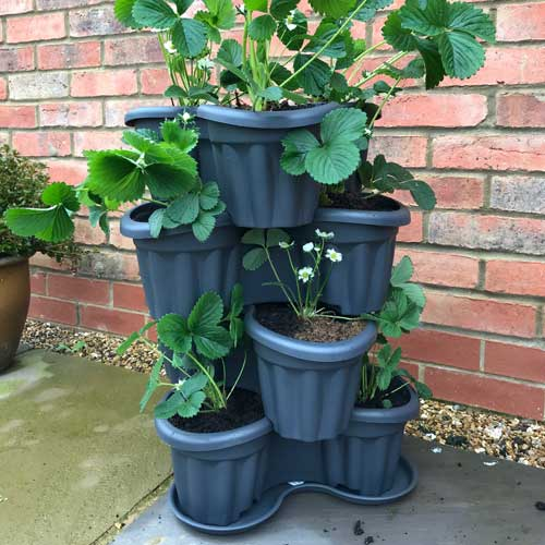 Stacking Planters with Saucer - Despatch From 8th February