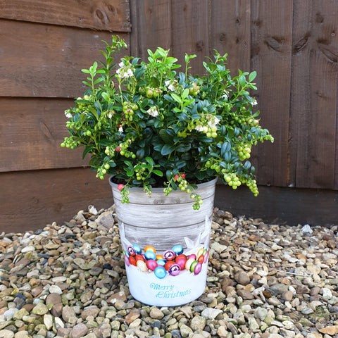 Cranberry Fireballs in Festive Pot Cover - Despatch from 9th November