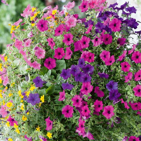 Basket and Container Plant Mixes