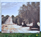 Olive Grove Oversized Canvas Art Print