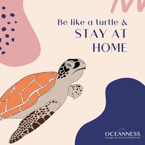 Be like a turtle and stay at home