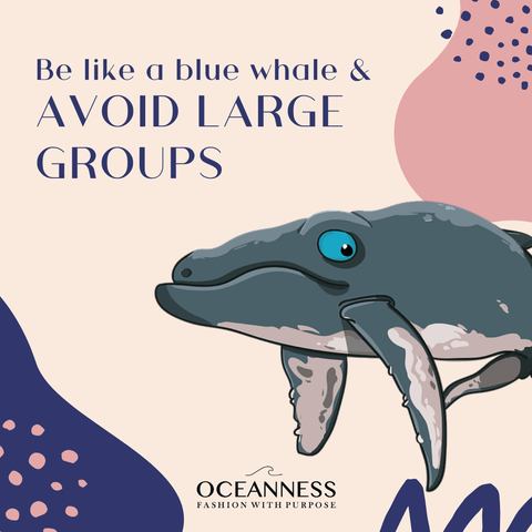 Be like a blue whale and avoid large groups