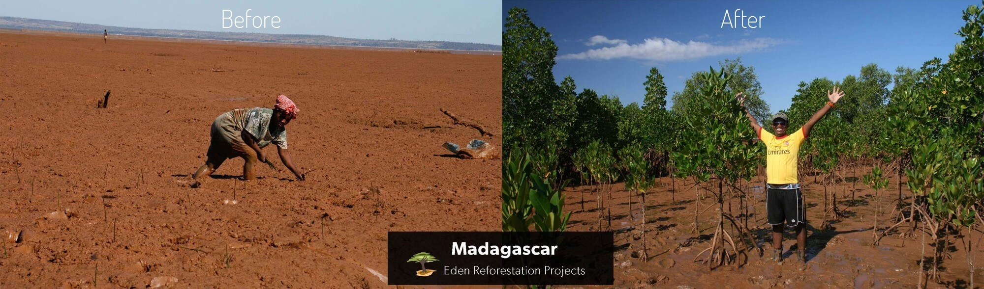 Eden Reforestation Project supported by Oceanness: Tree planting in Madagascar mangroves. Before and after planting trees.