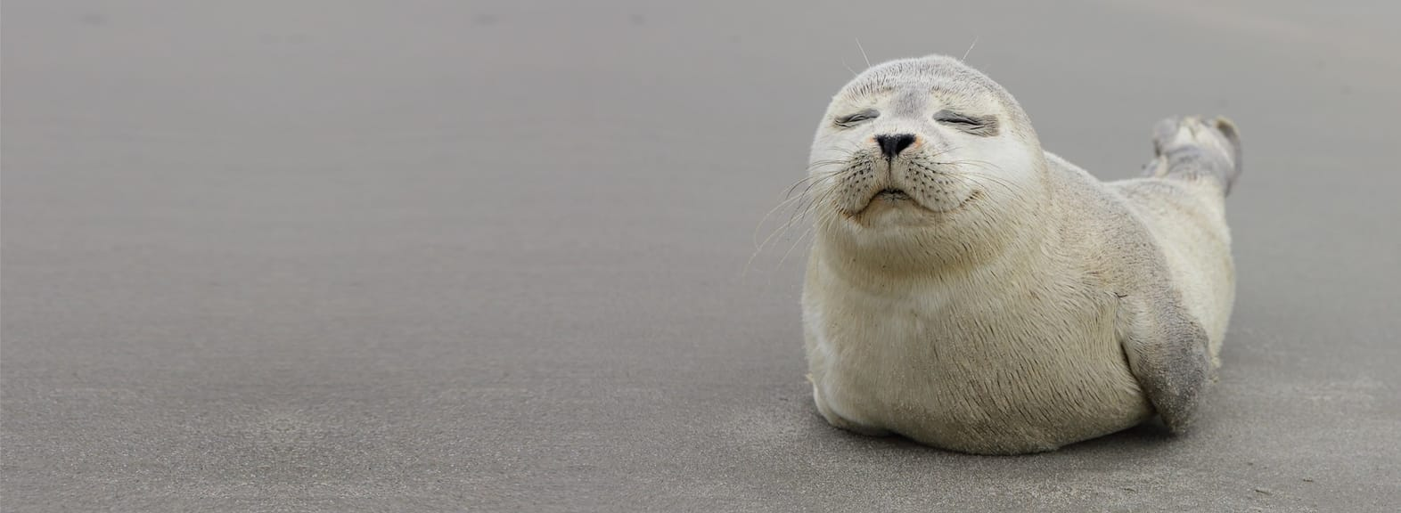 Cute baby seal pup on the beach