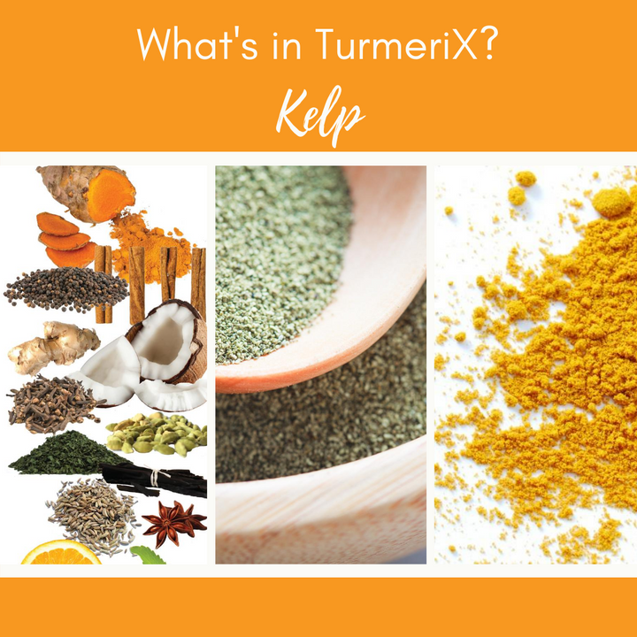 TurmeriX™ | The Benefits of Kelp