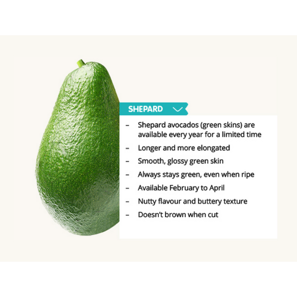 Best Avocado Shepard XL Jumbo - SuperFresh Grocer Singapore