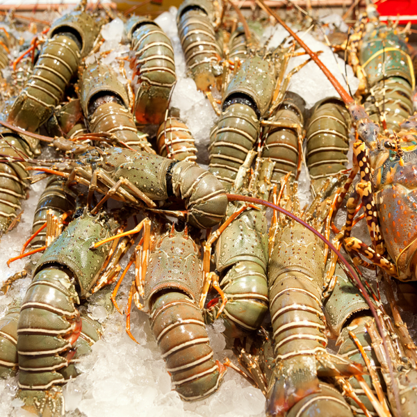 Best Crayfish Whole Shell On [Frozen Raw] - SuperFresh Grocer Singapore