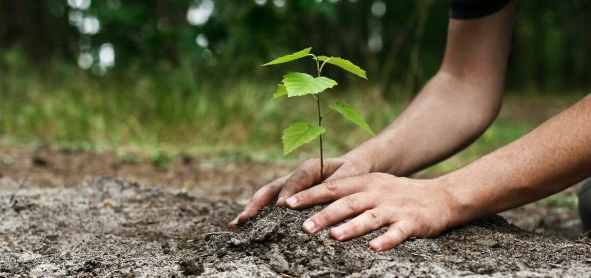 Installing solar is equivalent to planting around 150 trees yearly