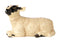 John Beswick Farmyard - Black Faced Lamb