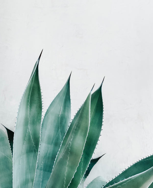 Aloe Vera: an ingredient with amazing skin properties perfect for summer.