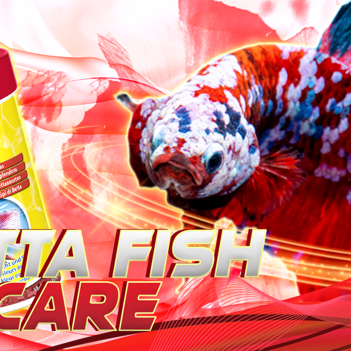 Betta Fish Care | Betta Care