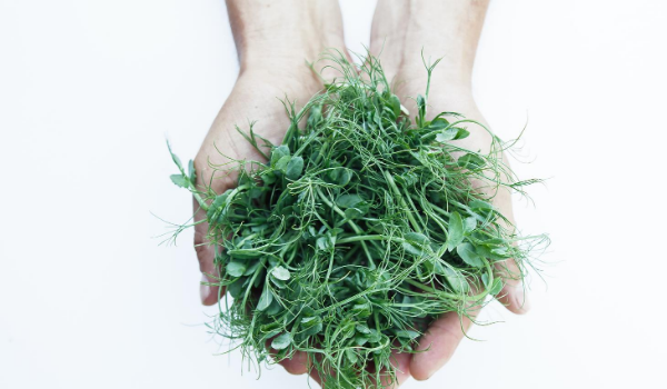 What Are Microgreens, Anyway?
