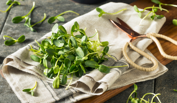 SUNFLOWER MICROGREENS: Nature's Cough Remedy