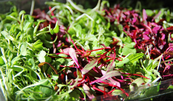 Microgreens: Superfoods of the 21st Century