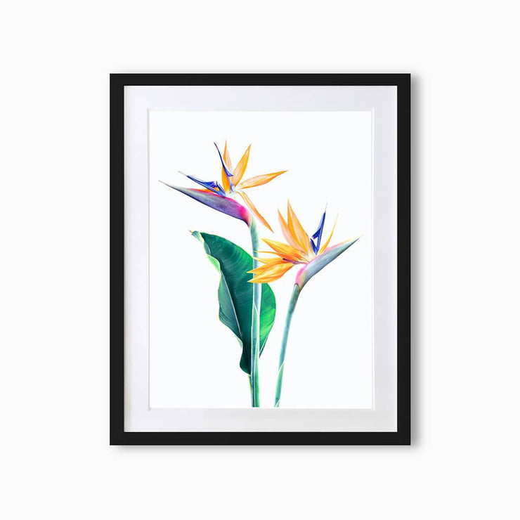 Bird of Paradise Botanique (Single Flower) Art Print - Lola Design Ltd