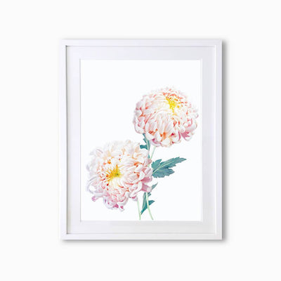 Chrysanthemums Botanique (Single Flower) Art Print - Lola Design Ltd