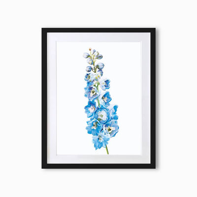 Delphiniums Botanique (Single Flower) Art Print - Lola Design Ltd