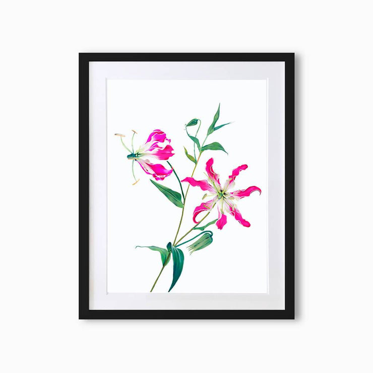 Fire Lily (Single Flower) Art Print - Lola Design Ltd