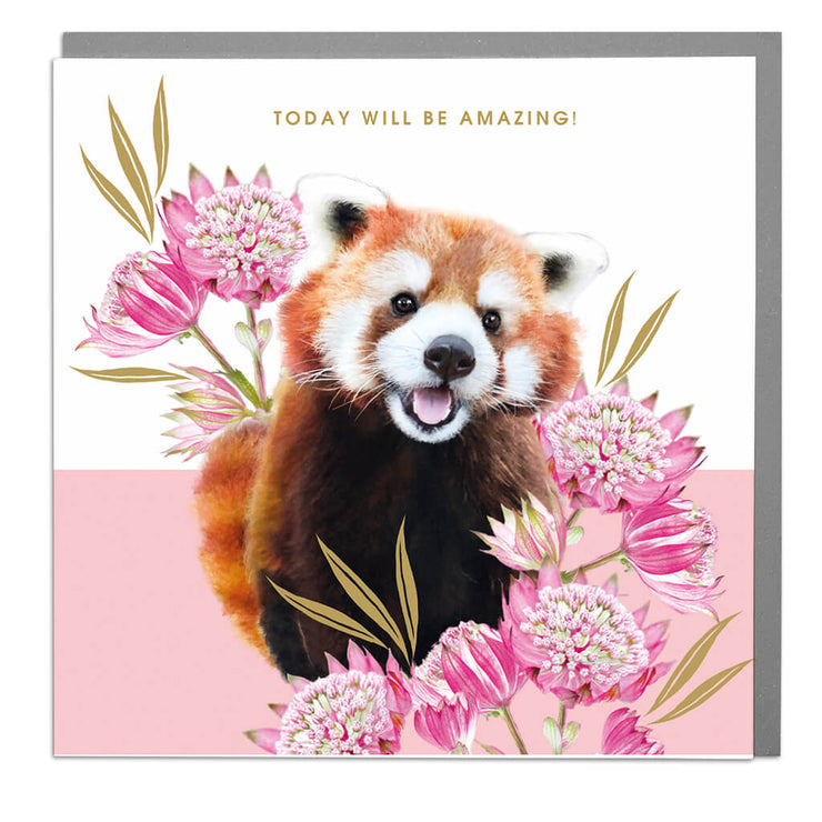Red Panda Amazing Day Card - Lola Design Ltd