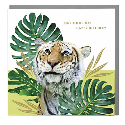 Tiger One Cool Cat Birthday Card - Lola Design Ltd