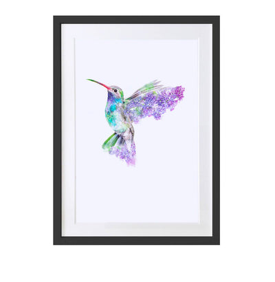 Hummingbird Art Print - Lola Design Ltd