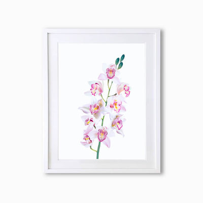 Orchid Botanique (Single Flower) Art Print - Lola Design Ltd