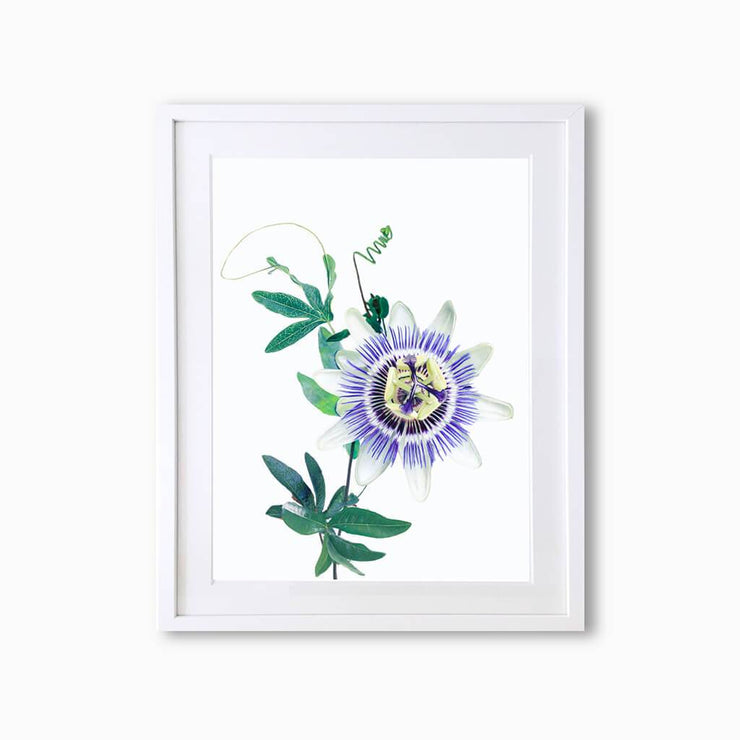 Passion Flower Botanique (Single Flower) Art Print - Lola Design Ltd