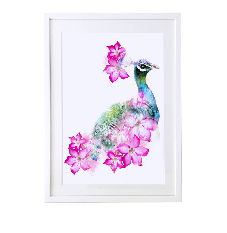 Peacock Art Print - Lola Design Ltd