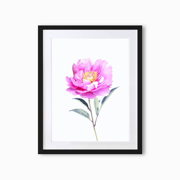 Peony Botanique (Single Flower) Art Print - Lola Design Ltd