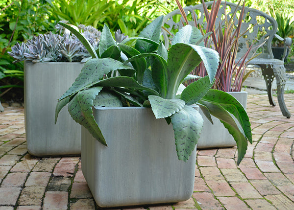 Short Square Planter