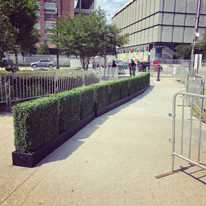 Boxwood Hedges
