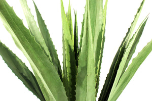 Agave Green Large