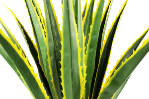 Agave Large Vibrant Yellow
