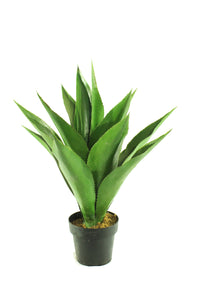 Agave Single Stalk Small