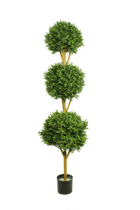 Boxwood Ball Three-Ball Topiary