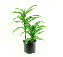 Load image into Gallery viewer, Artificial Dracaena 3'