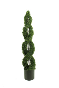 Double Spiral Evergreen Topiary