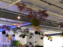 Load image into Gallery viewer, Kokedama Traditional Japanese Hanging Plant