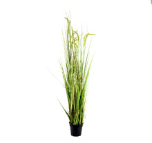 Load image into Gallery viewer, Foxtail Grass