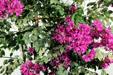 Load image into Gallery viewer, Bougainvillea Trellis