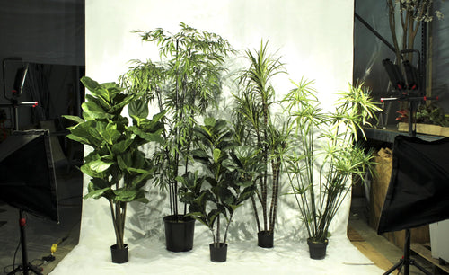 Tropical Plants - Assorted 6' Artificial