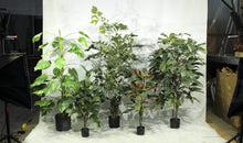 Load image into Gallery viewer, Tropical Plants - Assorted 6' Artificial