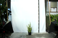 Load image into Gallery viewer, Sansevieria - Laurentii 2-3'