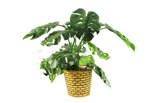 Monstera Deliciosa - Artificial